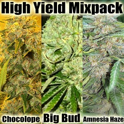 High Yield Mix Cannabis seeds For Sale