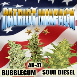 Patriot Mix Cannabis Seeds For Sale