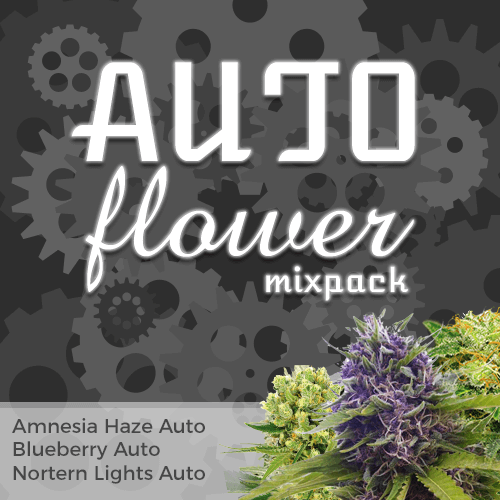 Buy Autoflower Mix Pack