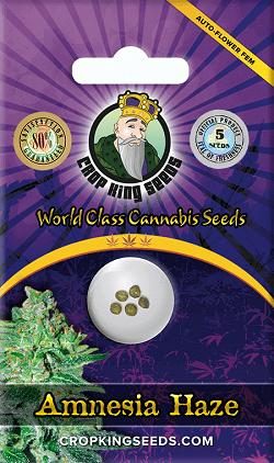 Buy Amnesia Haze Autoflowering Seeds