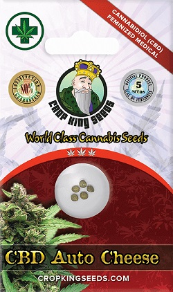 Buy CBD Auto Cheese Seeds