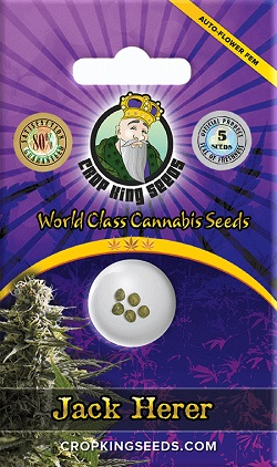 Buy Jack Herer Autoflowering Seeds