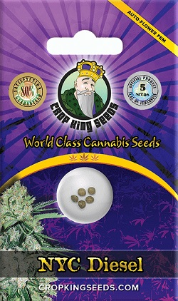 Buy NYC Diesel Autoflowering Seeds