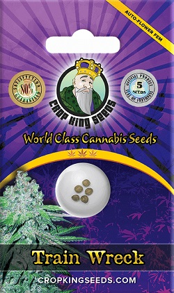 Buy Train Wreck Autoflowering Seeds
