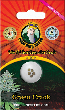 Buy Green Crack Cannabis Seeds