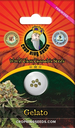 Buy Gelato Feminized Seeds