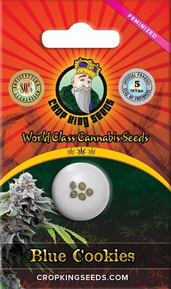 Buy Blue Cookies Cannabis Seeds