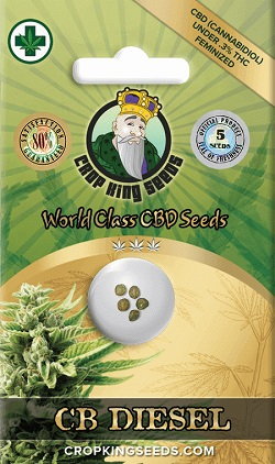 Buy CB Diesel Seeds