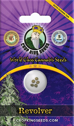 Buy Revolver Auto Flowering Seeds
