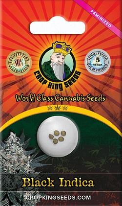 Buy Black Indica Cannabis Seeds