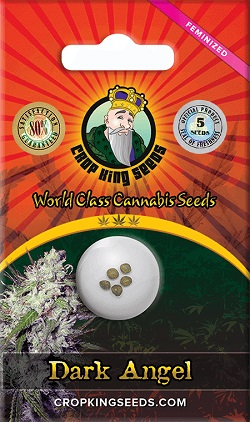 Buy Dark Angel Cannabis Seeds
