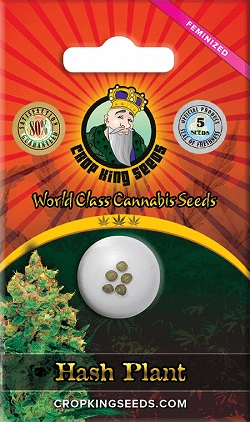 Buy Hash Plant Cannabis Seeds