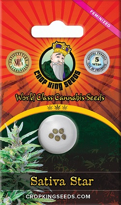 Buy Sativa Star Cannabis Seeds
