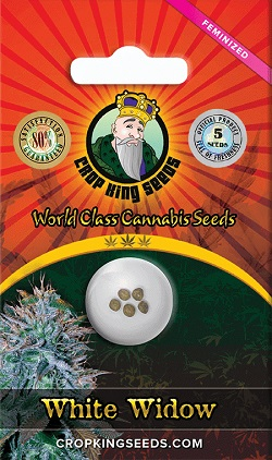 Buy White Widow Cannabis Seeds