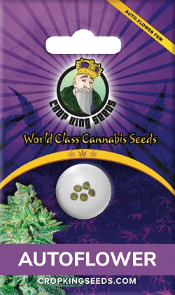 Buy Autoflowering Seeds