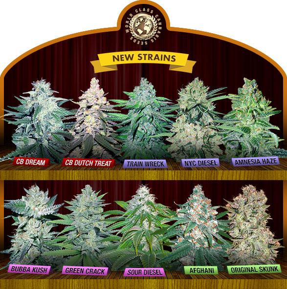 New Cannabis Seeds 2020
