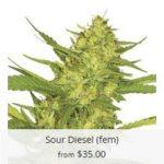Sour Diesel Marijuana Seeds