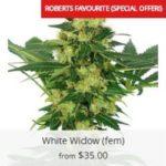 White Widow Marijuana Seeds