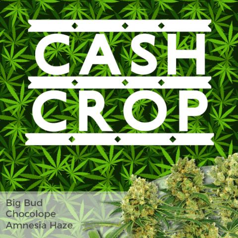 High Yield Mixed Marijuana Seeds