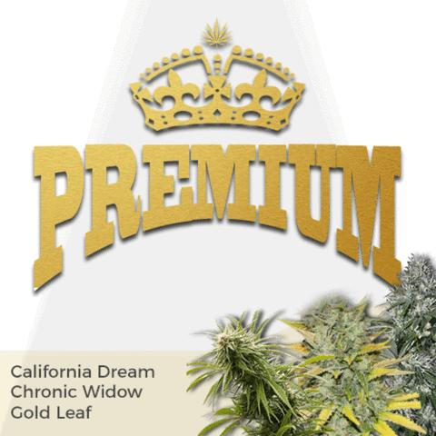Premium Mixpack Cannabis Seeds