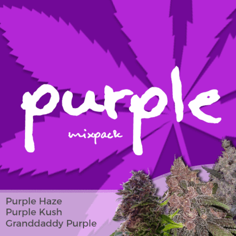 Purple Mixpack Cannabis Seeds