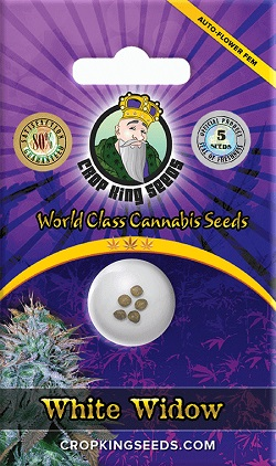 Buy White Widow Autoflowering Seeds
