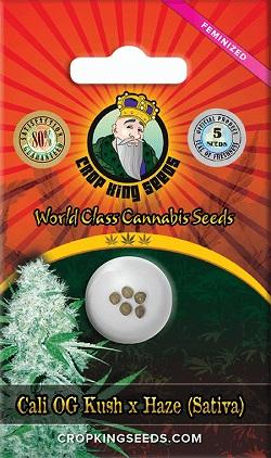 Buy Cali OG Kush Haze Seeds