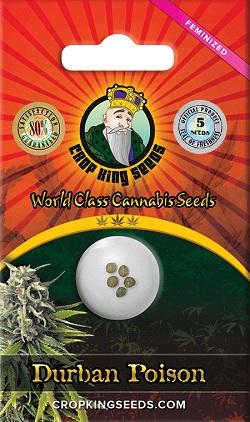 Buy Durban Poison Cannabis Seeds