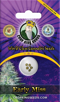 Buy Early Miss Auto Flowering Seeds