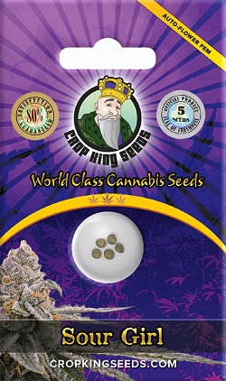 Buy Sour Girl Auto Flowering Seeds