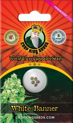Buy White Banner Cannabis Seeds