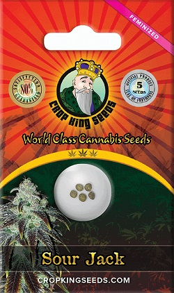 Buy Sour Jack Cannabis Seeds