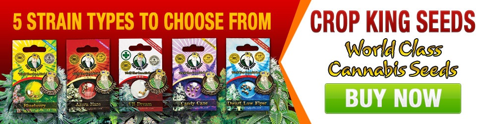 New Cannabis Seeds 2020 For Sale