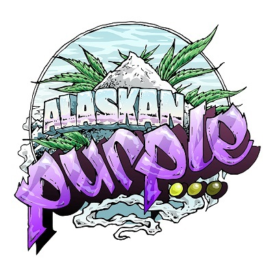 Alaskan Purple Feminised