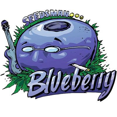 Blueberry Feminised