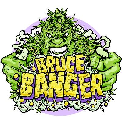 Bruce Banger Feminised