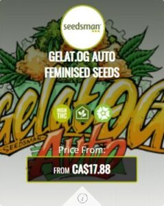 Gelat OG Autoflowering Seeds For Sale