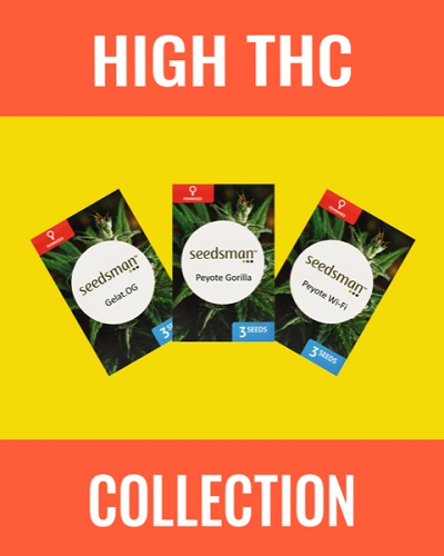 High THC Cannabis Seeds Mix