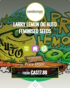 Larry Lemon OG Autoflowering Seeds For Sale