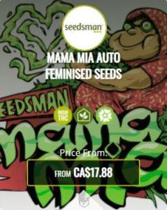 Mama Mia Autoflowering Seeds For Sale