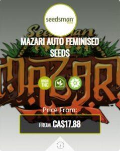 Mazari Autoflowering Seeds For Sale