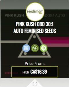 Pink Kush CBD 30.1 Autoflowering Seeds For Sale