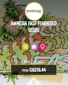 Amnesia Fast Feminized Seeds For Sale