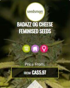Badazz OG Cheese Feminized Seeds For Sale