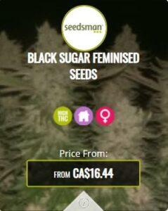 Black Sugar Feminized Seeds For Sale
