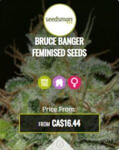 Bruce Banger Feminized Seeds For Sale