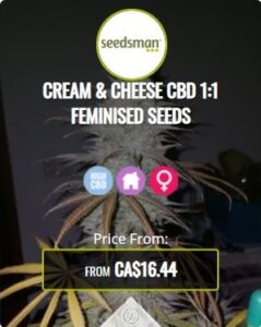 Cream Cheese CBD 1.1 Feminized Seeds For Sale