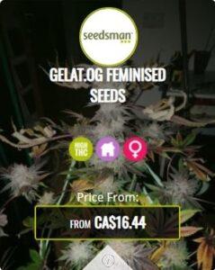 Gelat OG Feminized Seeds For Sale