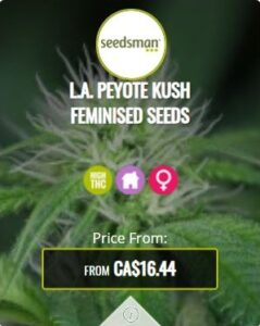 L.A. Peyote Kush Feminized Seeds For Sale