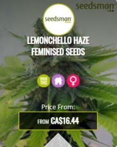 Lemonchello Haze Feminized Seeds For Sale